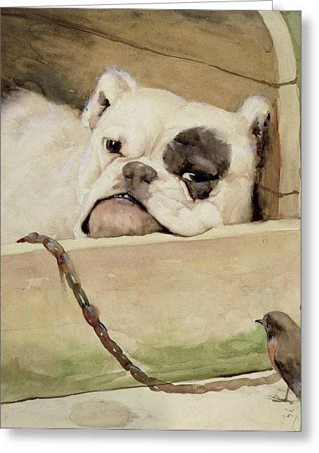 Chained Paintings Greeting Cards - Bulldog Greeting Card by Cecil Charles Windsor Aldin