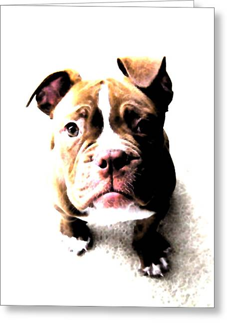 Puppies Digital Art Greeting Cards - Bulldog Puppy Greeting Card by Michael Tompsett