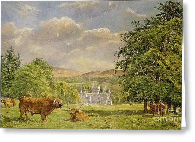 Bulls At Balmoral Greeting Card by Tim Scott Bolton