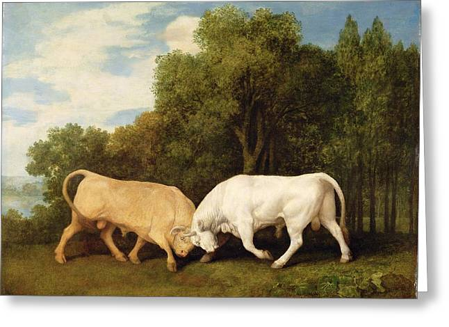 Bulls Fighting Greeting Card by George Stubbs