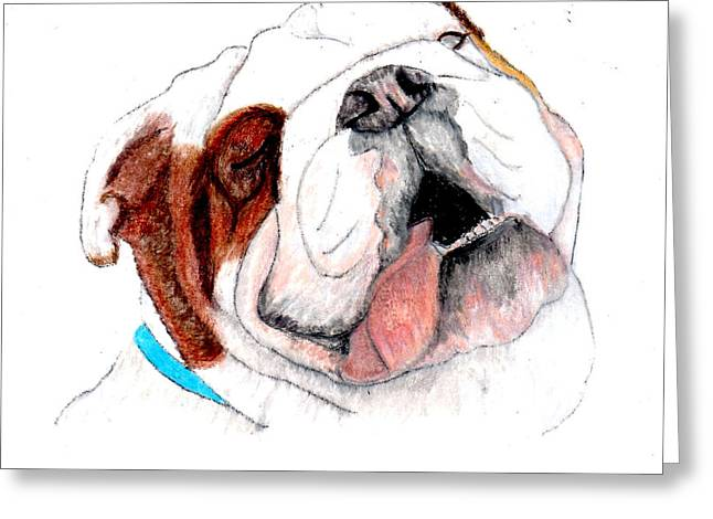 Puppies Drawings Greeting Cards - Bully For You Greeting Card by Barbara Giordano