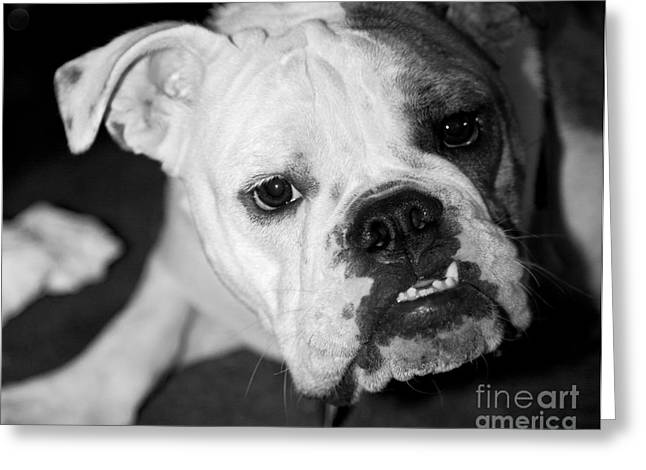 Leslie Leda Greeting Cards - Bully Greeting Card by Leslie Leda