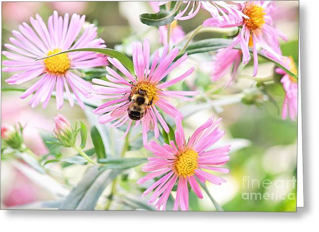 Bumble Bee On Asters Greeting Card by Lena Auxier