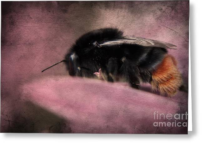 Bumblebee Greeting Cards - Bumblebee II Greeting Card by Angela Doelling AD DESIGN Photo and PhotoArt