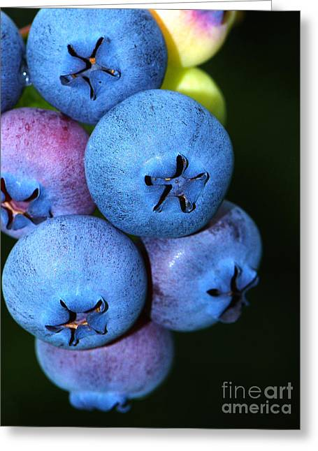 Ripening Fruit Greeting Cards - Bunch of Blueberries Greeting Card by Sharon  Talson