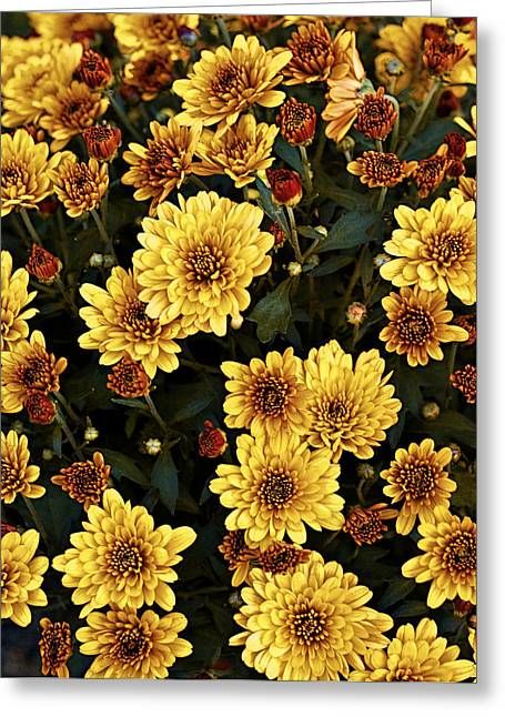 Sunflower Patch Greeting Cards - Bunch of Flowers Greeting Card by Malania Hammer
