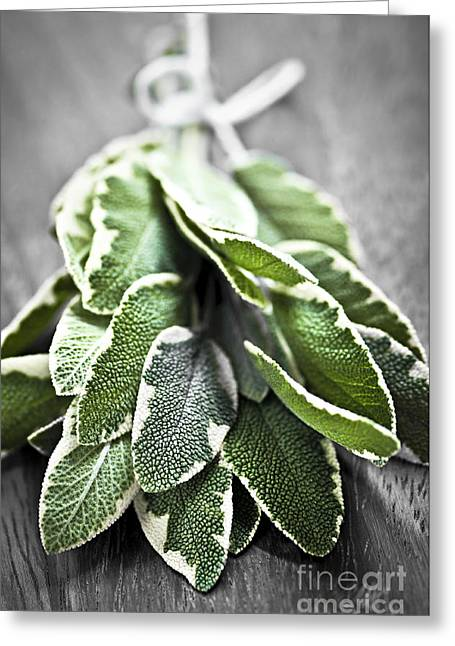 Various Greeting Cards - Bunch of fresh sage Greeting Card by Elena Elisseeva