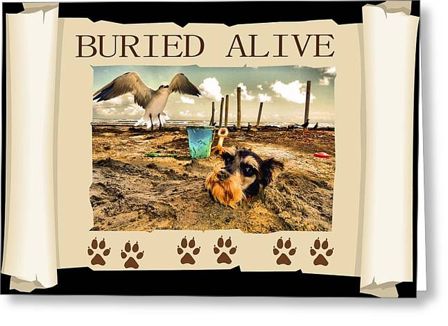 Schnauzer Greeting Cards - Buried Alive Greeting Card by Tisha McGee