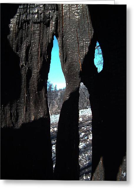 Mountain Road Greeting Cards - Burned Trees 10 Greeting Card by Naxart Studio