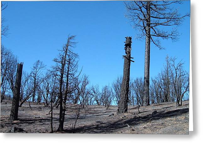 Burn Greeting Cards - Burned Trees in California Greeting Card by Naxart Studio