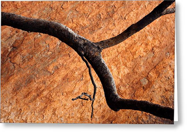 Tree Limbs Greeting Cards - Burnt Orange Greeting Card by Mike  Dawson