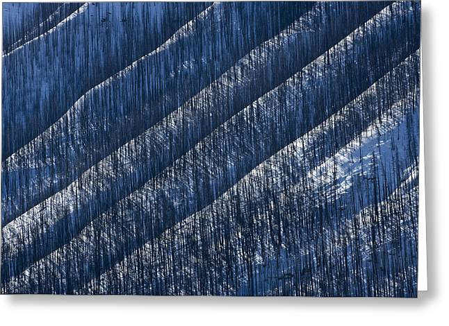 Burnt Trees On Mountain Slope Greeting Card by Mike Grandmailson