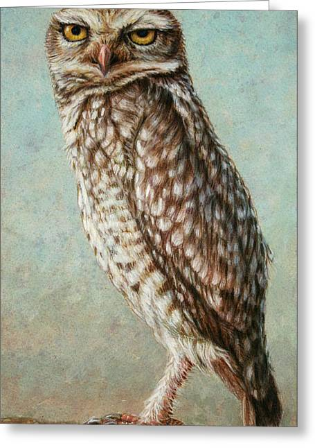 Animals Drawings Greeting Cards - Burrowing Owl Greeting Card by James W Johnson