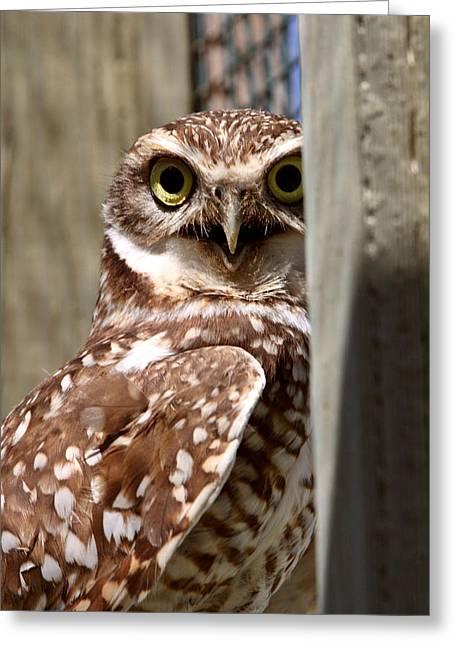 Wildlife Refuge. Digital Art Greeting Cards - Burrowing Owl on enclosed window seal Greeting Card by Mark Duffy