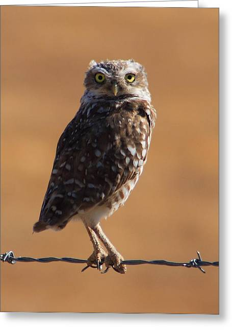 Randy Bayne Greeting Cards - Burrowing Owl Greeting Card by Randy Bayne