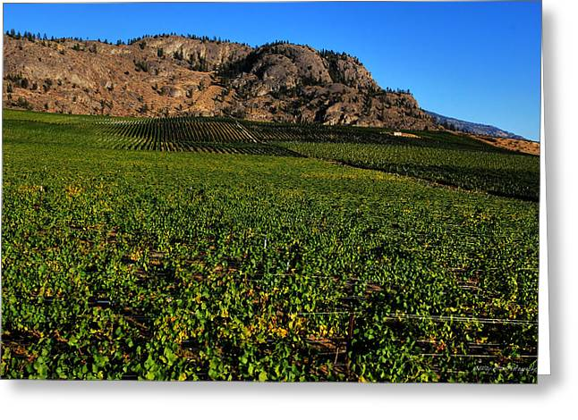 Wesley Allen Photography Greeting Cards - Burrowing Owl Vineyard Greeting Card by Wesley Allen Shaw
