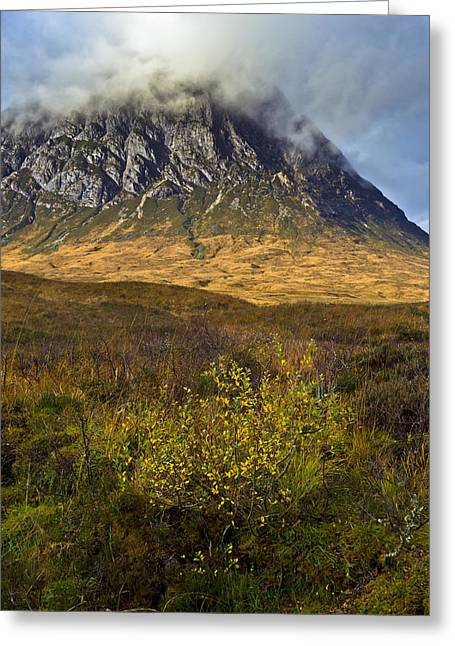 Etive Mor Greeting Cards - Bush below the Buckle Greeting Card by Gary Eason
