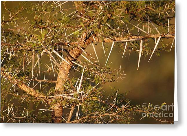 Branches Greeting Cards - Bush Stinger Greeting Card by Andy Smy