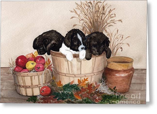 Newfoundland Puppy Greeting Cards - Bushel of Fun  Greeting Card by Nancy Patterson