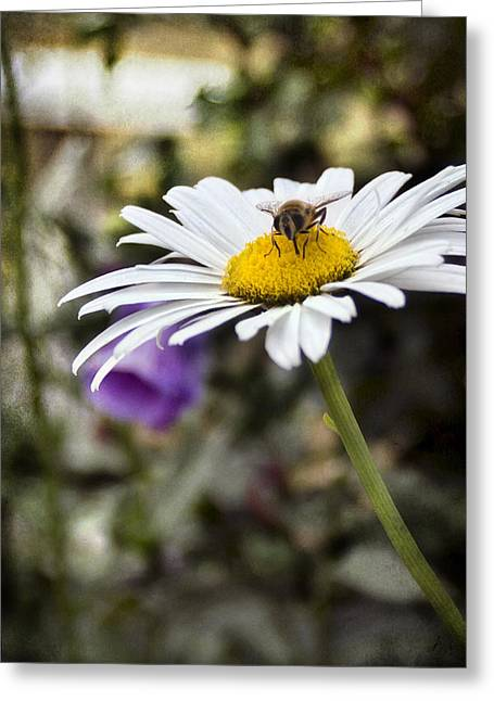Flower Blooms Greeting Cards - Busy Bee 2 Greeting Card by Peter Chilelli