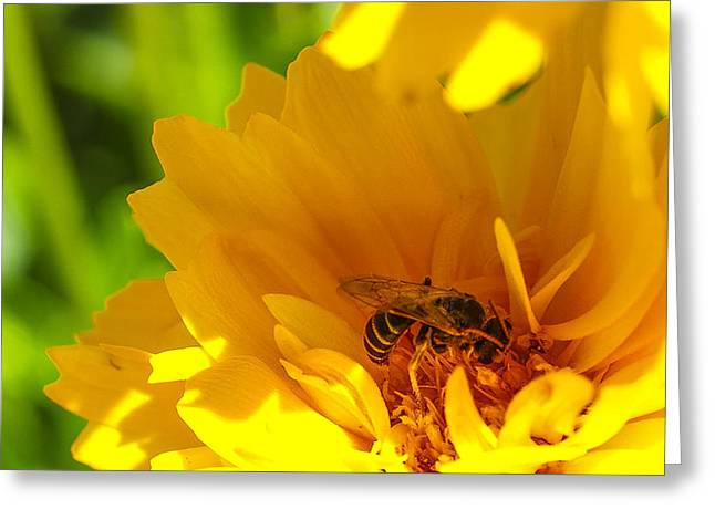 Pollinate Greeting Cards - Busy Bee  Greeting Card by Scott McGuire