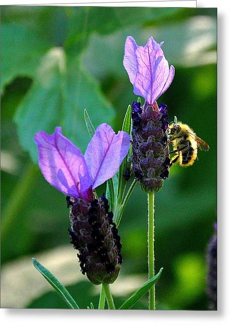 Searcy Greeting Cards - Busy Bee Greeting Card by Tanya  Searcy
