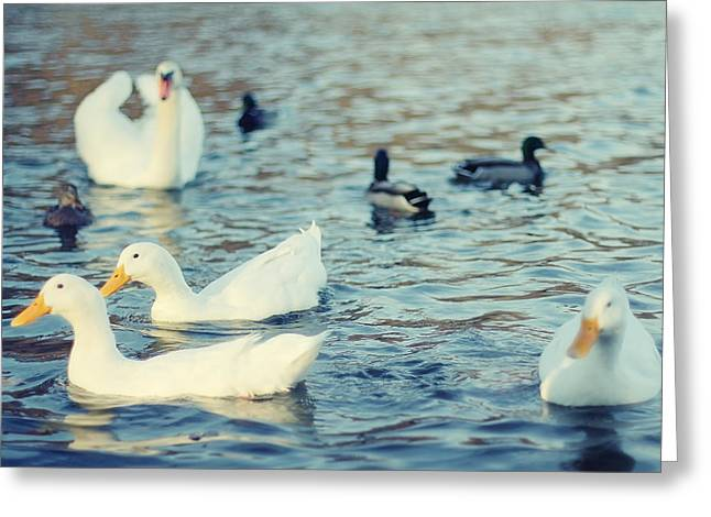 Mother Goose Greeting Cards - Busy Pond Greeting Card by Andrey Kopot