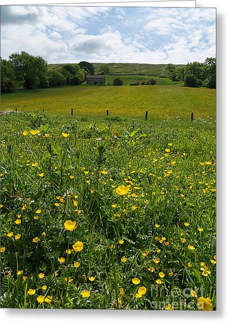 Buttercups In A Wildflower Meadow Greeting Card by Louise Heusinkveld