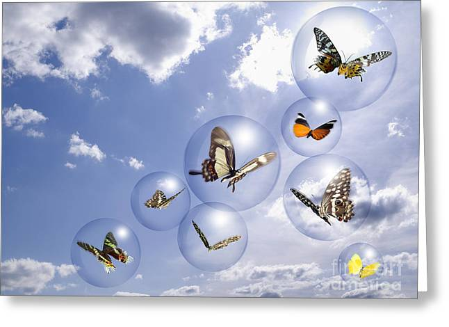 Flying Insects Greeting Cards - Butterflies and bubbles Greeting Card by Tony Cordoza