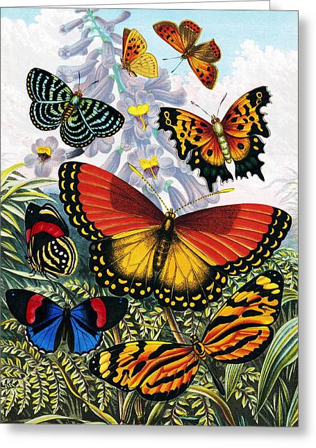 Artwork Of Butterfly Greeting Cards - Butterflies, Artwork Greeting Card by Sheila Terry