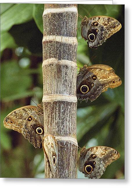 Tree Creature Greeting Cards - Butterflies Greeting Card by Bilderbuch