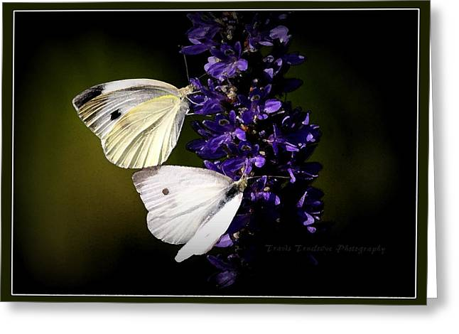 Travis Truelove Photography Greeting Cards - Butterflies - Cabbage Whites Greeting Card by Travis Truelove
