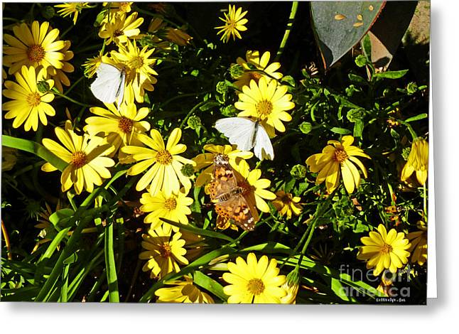 Painted Lady Butterflies Greeting Cards - Butterflies On The Daisies Greeting Card by Methune Hively