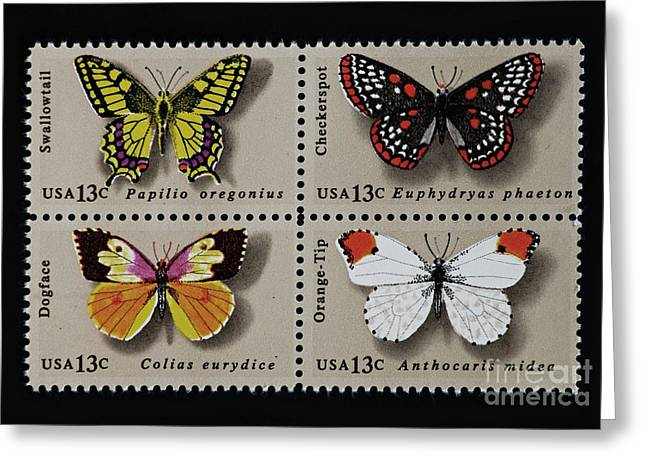 Checkerspot Greeting Cards - Butterflies postage stamp print Greeting Card by Andy Prendy