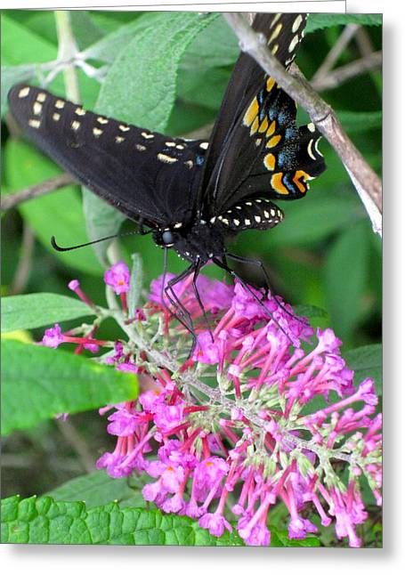 Indiana Springs Digital Art Greeting Cards - Butterfly 1 Greeting Card by Bruce McEntyre