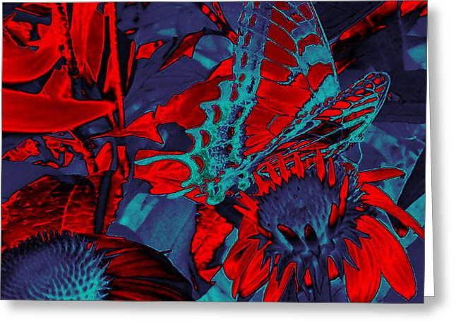 Sun Room Digital Art Greeting Cards - Butterfly Abstract Greeting Card by Patricia Motley