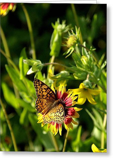 Butterfly And Blankets I Greeting Card by James Granberry