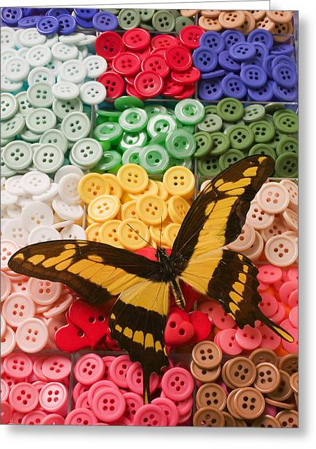 Compartments Greeting Cards - Butterfly and buttons Greeting Card by Garry Gay