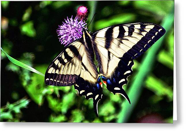 Macro Dragonfly Picture Greeting Cards - Butterfly and Thistle Greeting Card by Don Mann