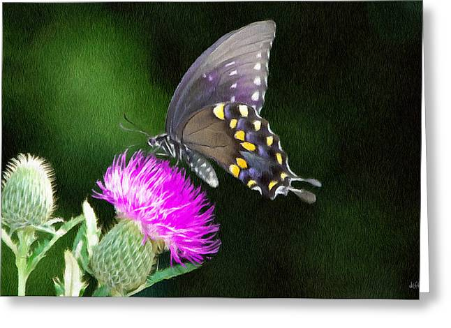 Black Greeting Cards - Butterfly and Thistle Greeting Card by Jeff Kolker