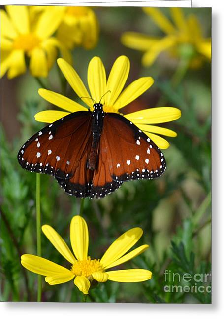 Green And Yellow Greeting Cards - Butterfly and yellow flowers Greeting Card by Rebecca Margraf