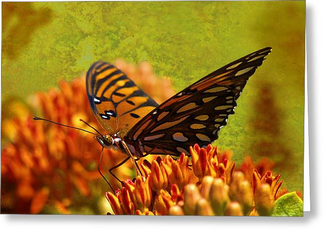 Butterfly Digital Art Greeting Cards - Butterfly At Ease Greeting Card by J Larry Walker