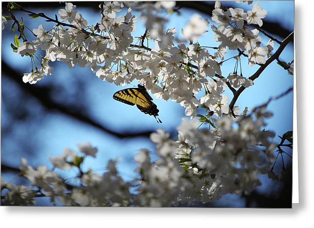 Nathan Grisham Greeting Cards - Butterfly Blossom Greeting Card by Nathan Grisham