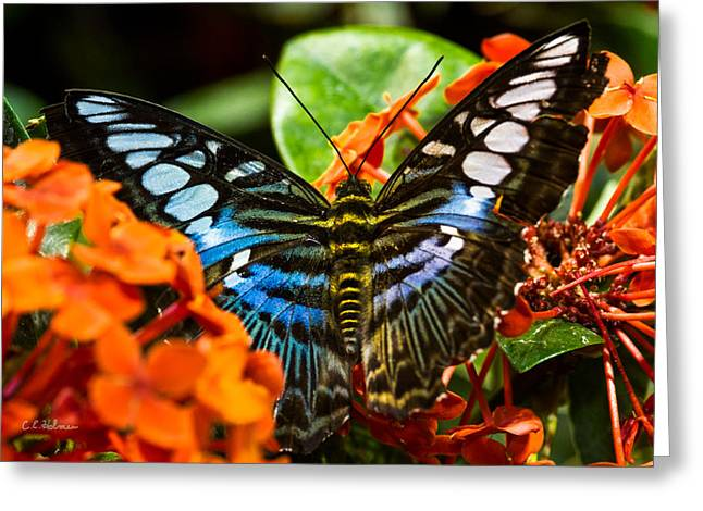 Christopher Holmes Greeting Cards - Butterfly Blue Greeting Card by Christopher Holmes