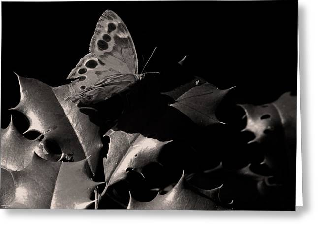Buterfly Greeting Cards - Butterfly Greeting Card by Brian M Lumley