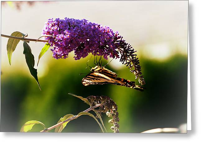 Butterflies Pyrography Greeting Cards - Butterfly Bush Greeting Card by Melissa  Maderos