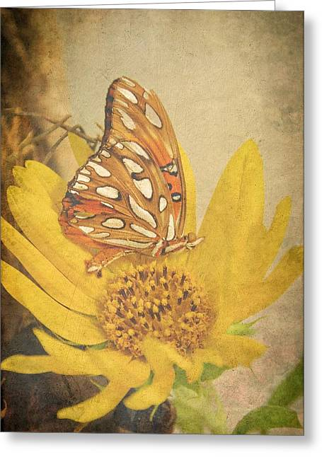 Soft Light Greeting Cards - Butterfly Dreams Greeting Card by Jan Amiss Photography