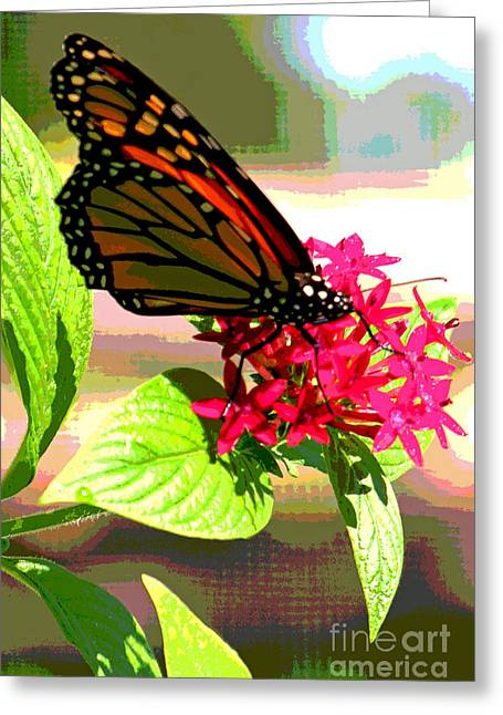 Fushia Greeting Cards - Butterfly Flowers Greeting Card by Peggy Starks