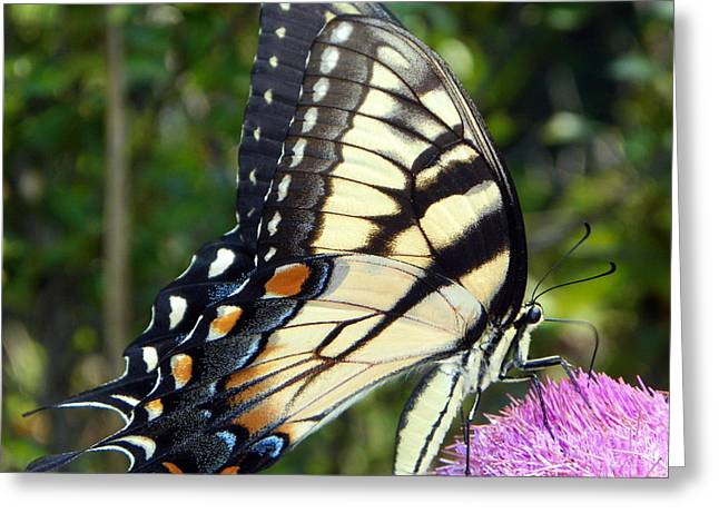 Butterfly Harvest II Greeting Card by Sheri McLeroy