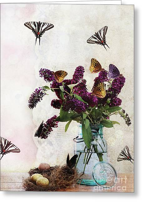 Spicebush Swallowtail Greeting Cards - Butterfly Haven Greeting Card by Stephanie Frey